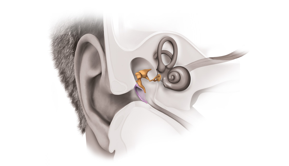 how-hearing-works-step2